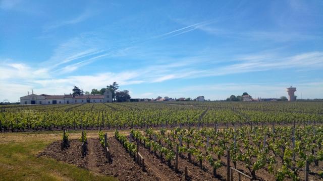 Un grand tour à vélo sur Bordeaux qui cumule activité physique et gastronomie
