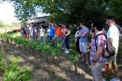 Découverte du vignoble à Pessac Leognan